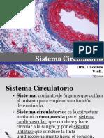 5 Histología Del Sistema Circulatorio