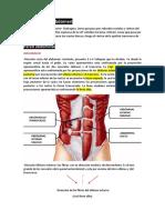Anatomia Del Abdomen
