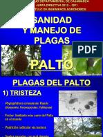 MIP PALTO.pdf
