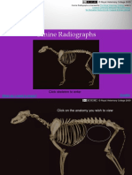 Canine Radiographs