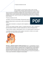 Forte Extraorale In Ortodontie