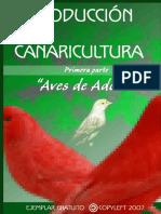 01 Aves de Adorno