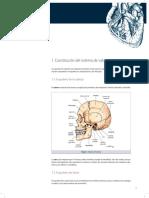 12. Anatomia