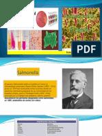Exposicion Salmonella