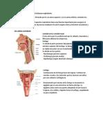 P.5,Sistema respiratorio. Temas previos.docx