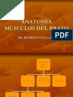 Músculos Del Brazo-1