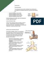 Articulacion Tibiofibular Distal