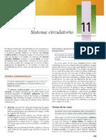 Sistema Circulatorio Gartner