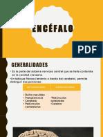 18.Encéfalo_NOMBRES