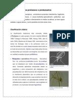 Los protozoos o protozoarios