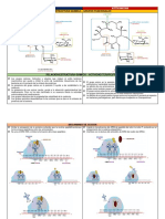 Farmacoquimica 2018 Laboratorio (Claritromicina - Azitromicina)