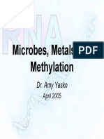 Dr.amy Yasko Microbes Metals Methylation