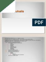 tuberculosis-pulmonar-1218509615402179-8-130210162855-phpapp01