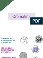 Cromatina Nov, 17 OPEXT05