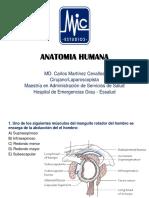 Ppt Anatomia Humana Pr