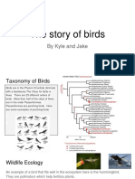 the story of birds