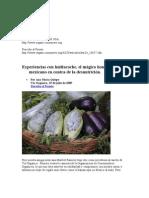 Experiencias con huitlacoche, el mágico hongo mexicano en contra de la desnutrición.
