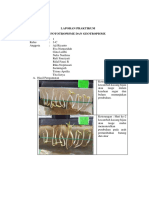 78386_laporan Praktikum Fototropisme Dan Geotropisme