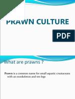 Prawn Culture