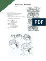 06.embriologia.pdf
