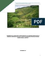 Proyecto de Reforestacion Ejecutado