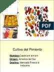 ecofisiologia del pimiento.pdf