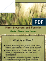 Intro to Plants