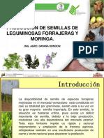 Produccion de Semilla de Moringa.pdf Inia