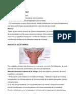 tutoria amigdala faringe