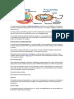 Celulas Eucariotidas y Procarotidas Psico