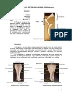 3 Osteologia.pdf