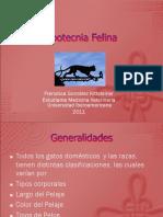 Zootecnia-Felina.ppt