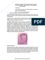Organos Linfoides Secundarios
