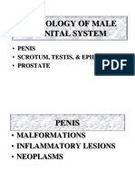 Male Reproductive Pathology 2017