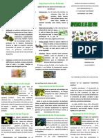 triptico de importancia de los seres vivos (biologia).pdf