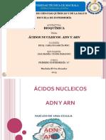 acidos nucleicos bioquimica