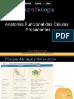 3. Anatomia Funcional Cels