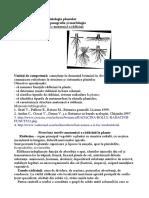 Structura Morfo-Anatomică a Rădăcinii