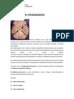 Nervos Cranianos-