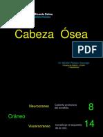 17 - Osteología Cabeza