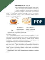 CRECIMIENTO DEL TALLO 1.docx
