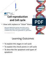 8 Cell Cycle