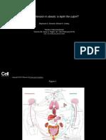 Hypertension in Obesity
