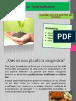 PLANTAS TRANSGÉNICAS