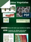 tejidos-vegetales.pdf