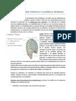 7_1 Pared Torácica y Glándula Mamaria (Carta)