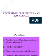 Reversible Cell Injury and Adaptation (09.11.2017)