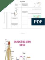 Sistema Neurologico
