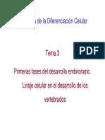 Tema 3 BDC. Primeras Fases Del Desarrollo Embrionario. Linaje Celular
