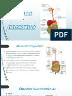 Equipo de Bases Aparato Digestivo 26-05-2017